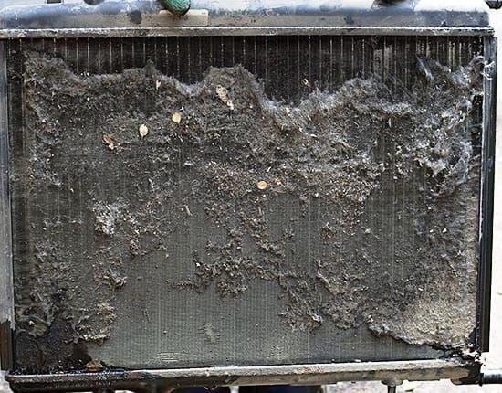 zabitii-radiator-moika